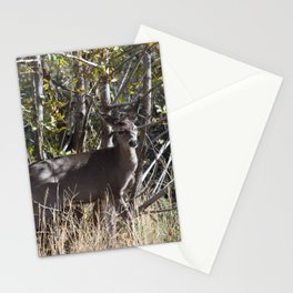 Doe at the edge of the woods line in Payson, Arizona Stationery Cards