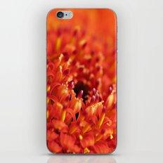 Orange Gerbera iPhone & iPod Skin