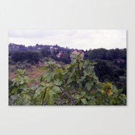 Fig Tree in Boboli Gardens  | Toscany, Italy, 2001 | Analog | Fine art landscape photography Canvas Print
