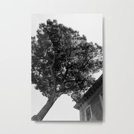 Italian Stone Pine Tree IV Metal Print