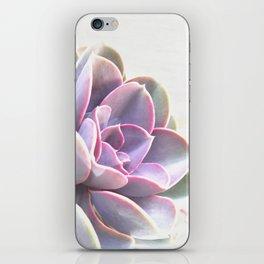 pink succulent plant iPhone Skin