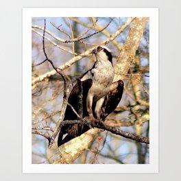 Maine Osprey Art Print