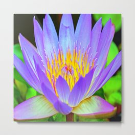 Blue-Purple Water Lilly Flower Metal Print