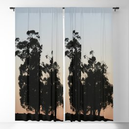 Eucalyptus trees at sunset Blackout Curtain
