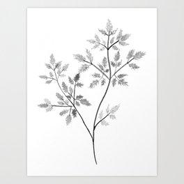 Chervil in Black and White Art Print