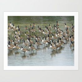 Canada Geese Partial Frozen Lake Art Print