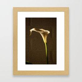 White Flower - Cala Framed Art Print