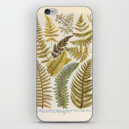 Vinatge Fern Illustration iPhone Skin