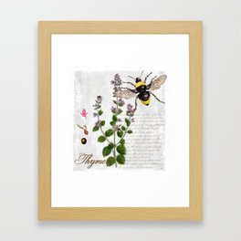 Cottage Style Thyme, Bumble Bee, Hummingbird, Herbal Botanical Illustration Framed Art Print