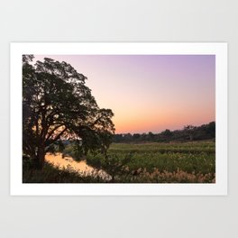 Kruger Park Twilight Art Print