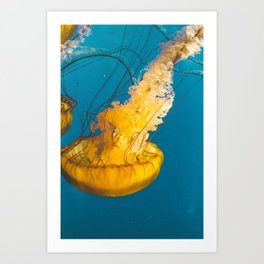 Pacific Sea Nettle Jellyfish III Art Print