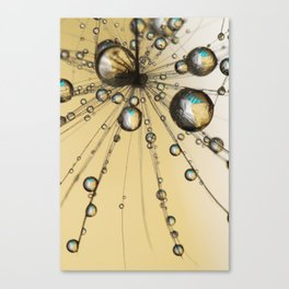 Single Dandy Seed Web Drops Canvas Print