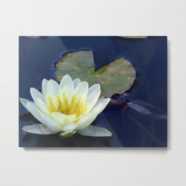 Water Lilly 2 Metal Print