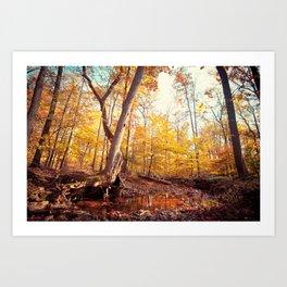 The Mystical Pond Art Print
