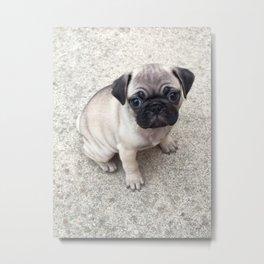 skittles the pug Metal Print