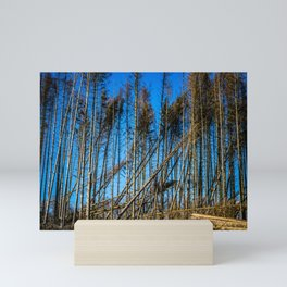 Fallen Trees After Storm Victoria February 2020 Möhne Forest Mini Art Print
