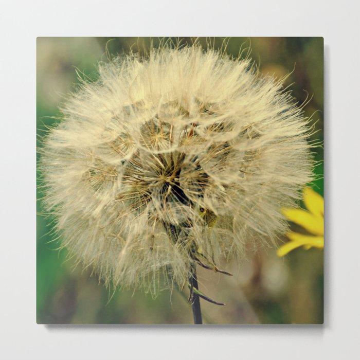 Dandelion | Make a wish Metal Print