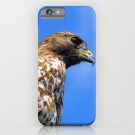 Portrait of a Beautiful Hawk  iPhone Case