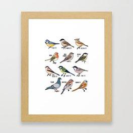 Birdwatching Birder Gift Wildlife Birds Framed Art Print