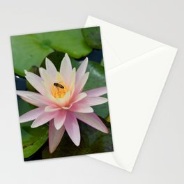 Bee with Pink Waterlily Stationery Cards