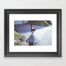 alley cat Framed Art Print