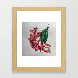 """Hibiscus"" Drawing Framed Art Print"
