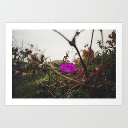 Lonely flower of Naszály mountain Art Print