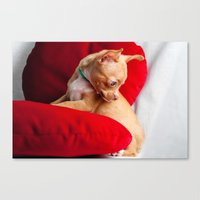 chihuahua Canvas Prints featuring Chihuahua by Luca Spanu