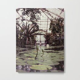 Lillypads with blooms Metal Print