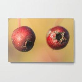 Hawthorn berries Metal Print