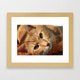 Lazy Cat Framed Art Print