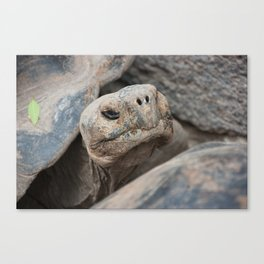 The ancient one Canvas Print