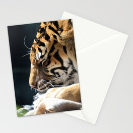 Tiger 006 Stationery Cards