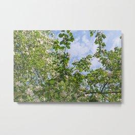 Spring, Apple blossoms, White, Pink Flowers sunlight Retro Pastel Metal Print
