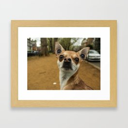Four eyed Chihuahua?! Framed Art Print