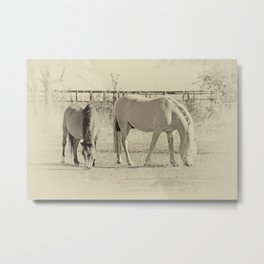 Horses on pasture Metal Print