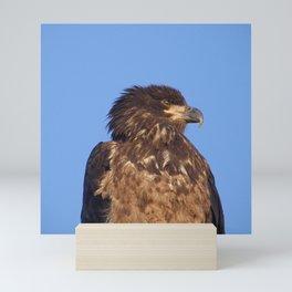 Golden Eagle on the Kenai Mini Art Print