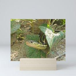 Garter snake playing hide and seek Mini Art Print