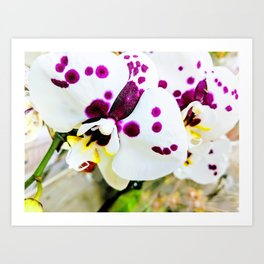 Spotted Orchids II Art Print
