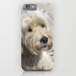 Dog Goldendoodle Golden Doodle iPhone Case