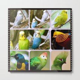 Exotic Bird Budgie Metal Print