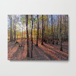 Fall Sunrise Metal Print