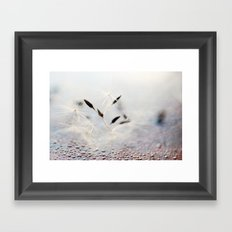 dandelion with rain drops Framed Art Print
