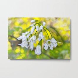 White woodland flora. Metal Print