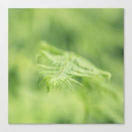 Delicate Fern Canvas Print