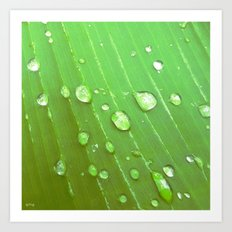 Jungle Drops. Art Print