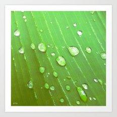 Jungle Drops. Art Print