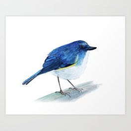 Red-Flanked Bluetail Watercolor Bird (Blank background) Art Print
