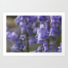 The Bluebell Patch Art Print