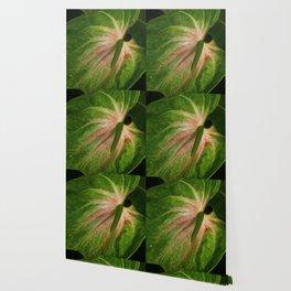 Tail Flower Wallpaper